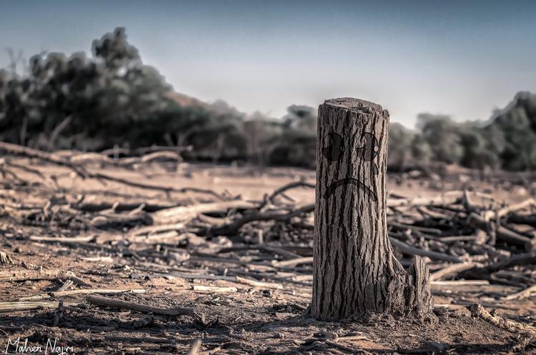 Нинішні зміни клімату не мають аналогів в історії людства – звіт