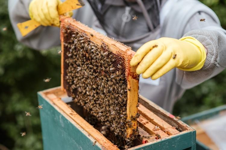 Катар відкрив ринок для українських виробників меду та продуктів бджільництва