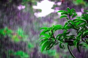 В Украине станет холоднее и пройдут дожди