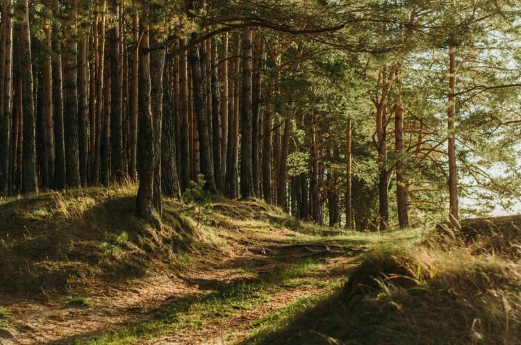 Україна до кінця року може відмовитися від мораторію на вивіз лісу – голова Держлісагентства