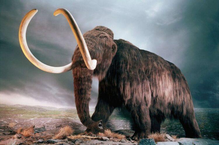Стартап у США має намір «воскресити» мамонтів – перші екземпляри з'являться вже в 2025 році