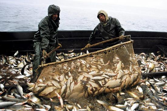 Промвилов риби в Україні у січні-серпні скоротився на 2,7% - Держрибагентство