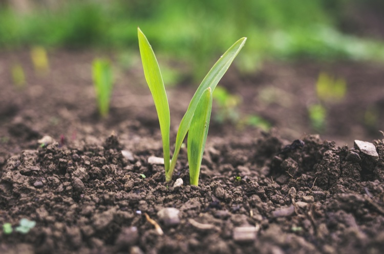 Мінагрополітики розробило правила забезпечення родючості ґрунтів і застосування агрохімікатів