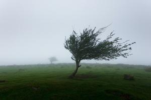 Сильный порывистый ветер принесет в Украину потепление