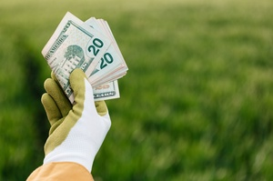 Українці продали 58 500 га сільськогосподарської землі за три місяці роботи ринку