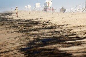 34 квадратних кілометри нафти: аварія вишки в Каліфорнії спричинила екологічну катастрофу