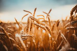 Україна вже експортувала понад 15 млн тонн зерна