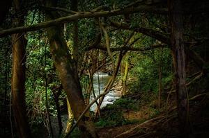 Facebook боротиметься з незаконним продажем лісів Амазонії після журналістського розслідування