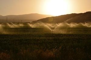Держава компенсує 25% витрат агровиробникам, які використовують зрошення – Шмигаль