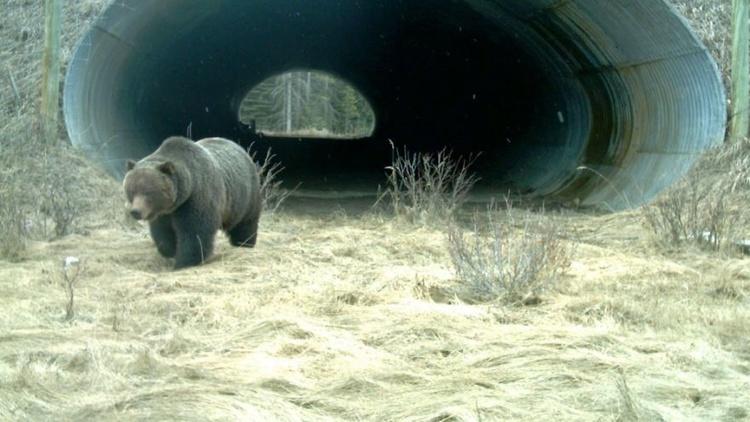 В Україні побудують екодуки – переходи через дорогу для диких тварин